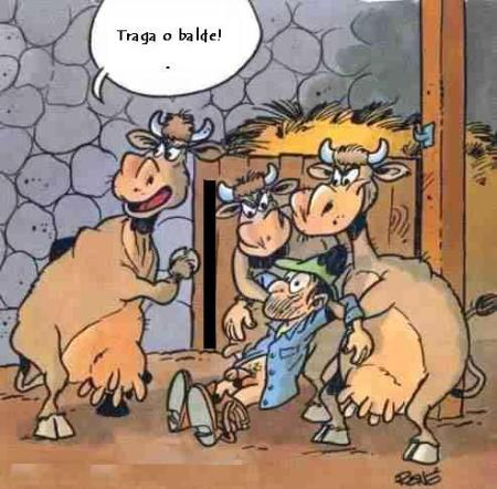 as vacas.